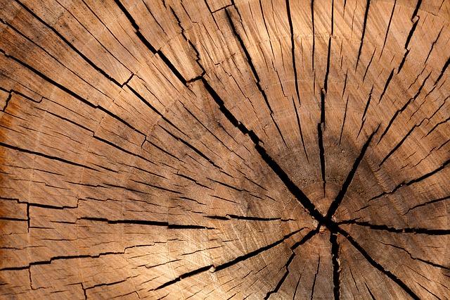 řez kmenem stromu