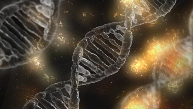 projekce DNA